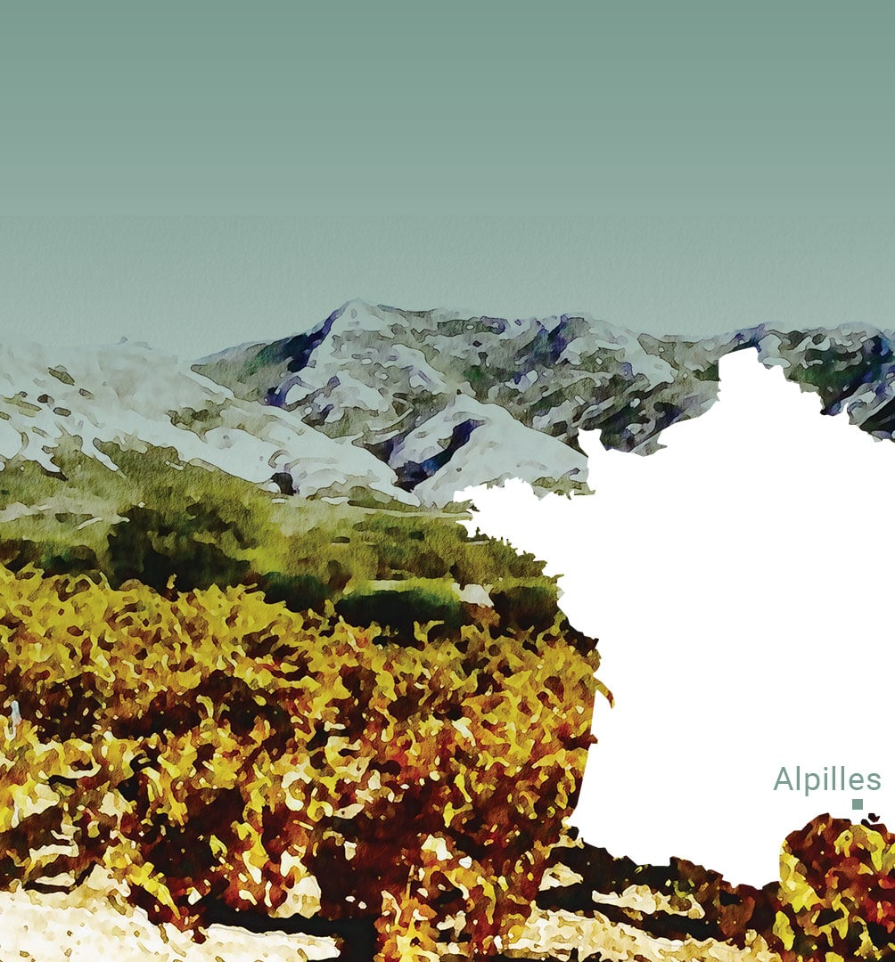 The Alpilles